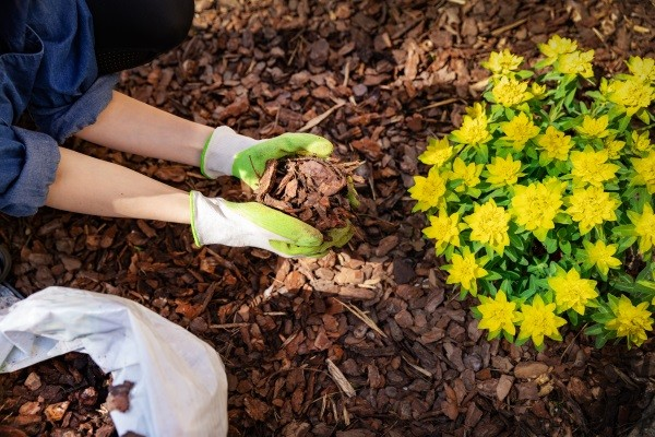 Bed Maintenance Mulching