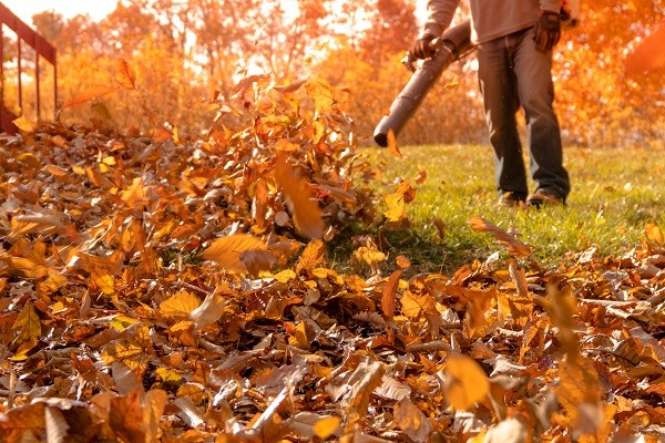Racine Fall Leaf Cleanup Service